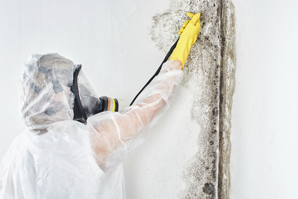 Essential Tips to Prevent Mold from Damaging your Home in Richmond