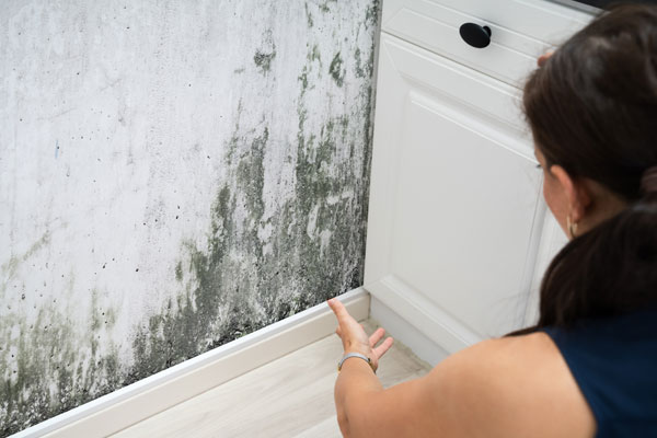 Keeping Mold Away in Richmond After it Shows Up